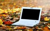 Laptop bland höstlöv