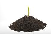 Planta i jord