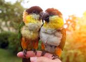 Två fåglar som sitter på ett finger