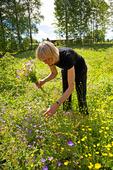 Kvinna plockar blommor
