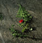 Blomma på kyrkogolv