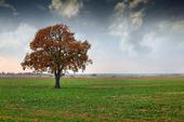Höstträd på en äng