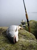 Fiskefångst
