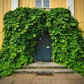 Igenväxt dörr