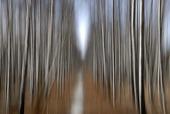 Trädstammar - rörelseoskärpa