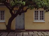 Träd framför hus