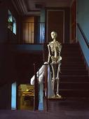 Skelett i skola