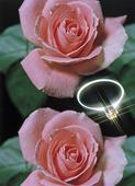 Ring och rosor
