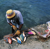 Fishermen in Guadeloupe, Caribbean