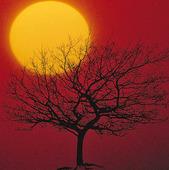 Solen bakom ett träd