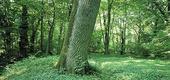 Lövskog