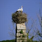 Storkbo