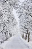 Vinterallé