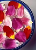 Tulpanblad i skål
