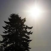 Sol och gran