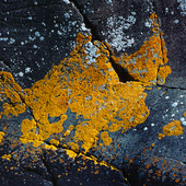 Lav på stenhäll