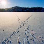 Harspår i snö på frusen insjö