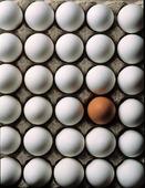 Vita ägg och ett brunt ägg