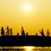 Sol över barrskog