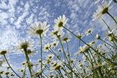 Blommor mot himmel
