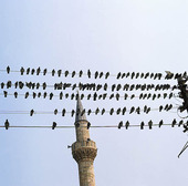 Birds on power, Turkey