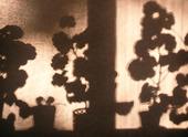 Skugga från krukväxter