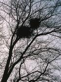 Fågelbon i träd