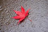 Röda blad på marken