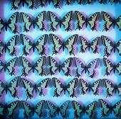 Döda fjärilar