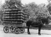 Transport av Pripps öl, 1900-talet