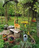Katt i trädgård