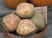 Kålrötter