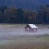 Röd stuga i dimma