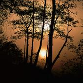 Soldis i naturen