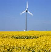 Windfarms in rapsmark