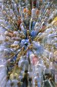 People's Mass