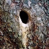 Fågelbo i träd