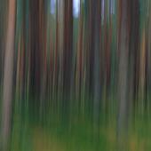 Idébild skog