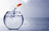 Goldfish hoppar i havet