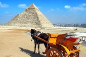 Häst och vagn vid pyramid i Giza, Egypten