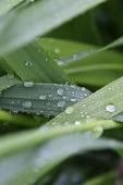 Dagg på växt