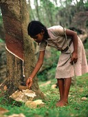 Flicka vid gummiträd, Sri Lanka