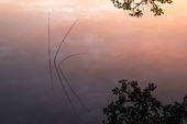 Vass i morgonljus