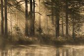 Oktobermorgon i naturen