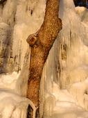 Isfall vid träd