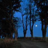 Träd i månsken