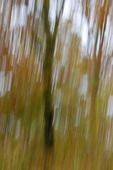Träd i rörelse
