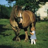 Flicka vid häst