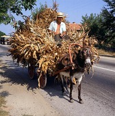 Transport av tobaksblad,  Bulgarien