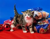 kattunge vid julklappar